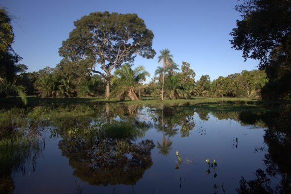 Espelho d'água na temporada de cheia - Foto: Fábio Paschoal