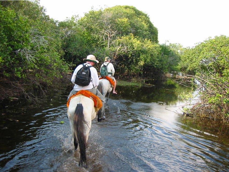 Pantanal de Poconé - Viagem e Ecoturismo no coração do Brasil - Chapada Explorer